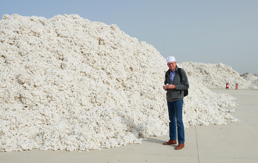 Raw seed cotton just delivered from the fields